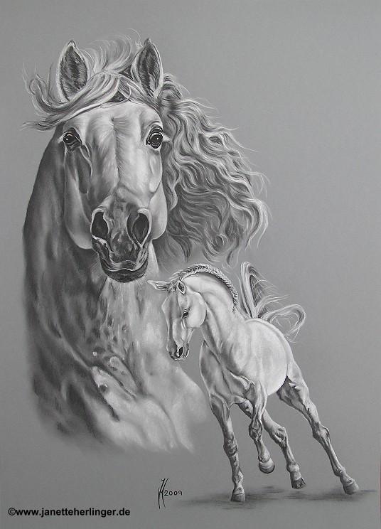 Portrait Von Tieren Meisterhafte Tierportraits Von Katze Pferd